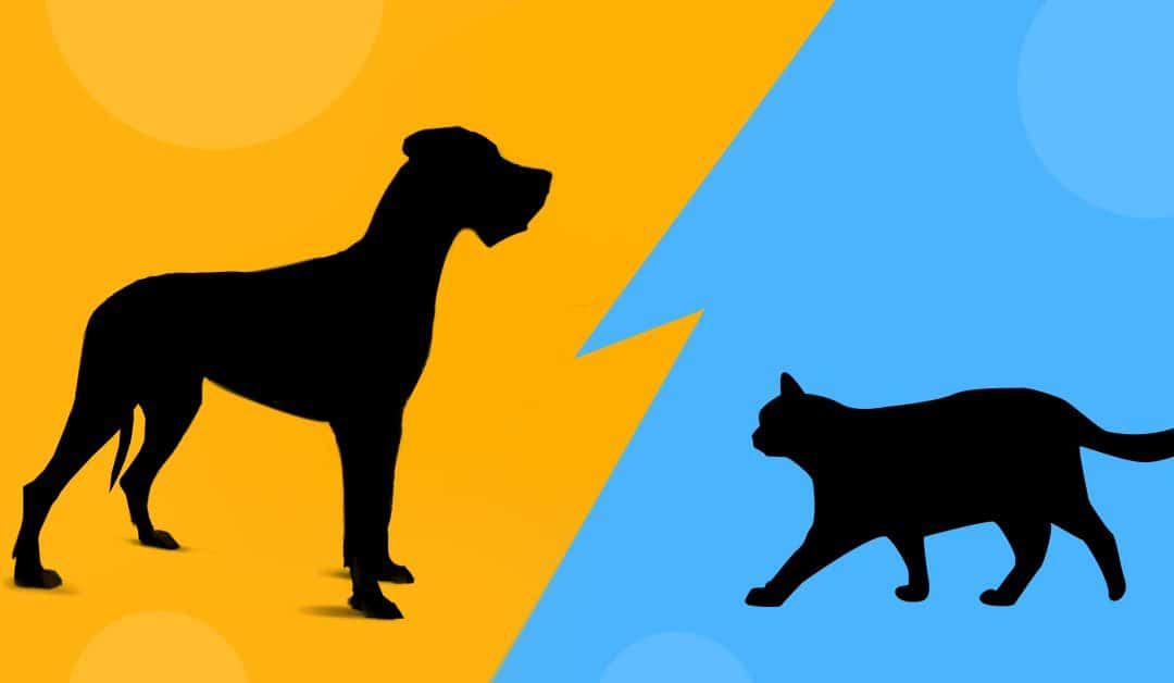 GPS dla psa i kota – jak wybrać odpowiedni lokalizator?