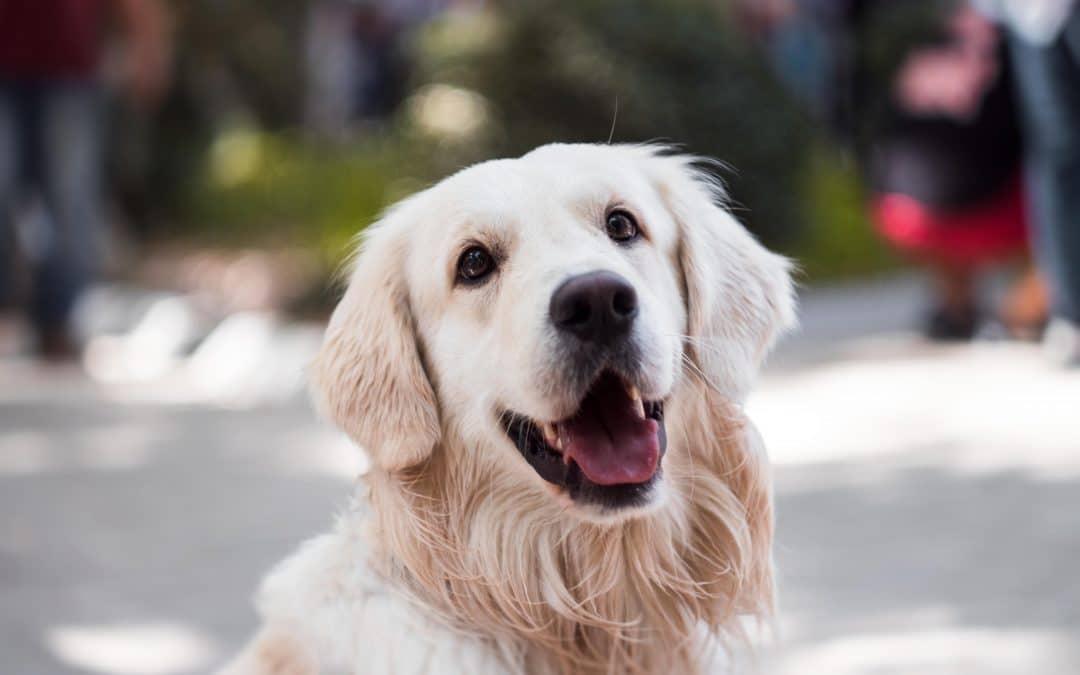 Jaki prezent kupić dla psa?