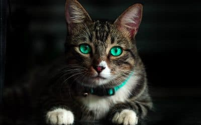 Jak dbać o bezpieczeństwo kota?