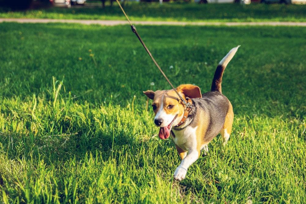 Dlaczego trzeba spacerować ze zwierzęciem?