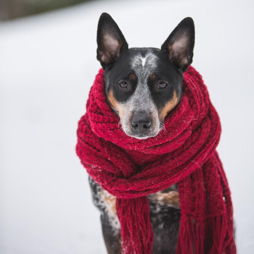 Jak dbać o zwierzę zimą?