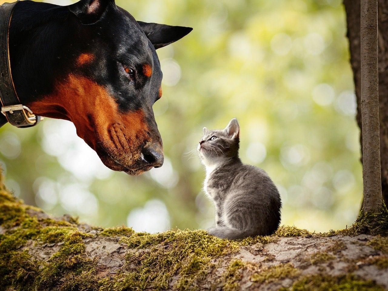 Kot i pies w jednym domu