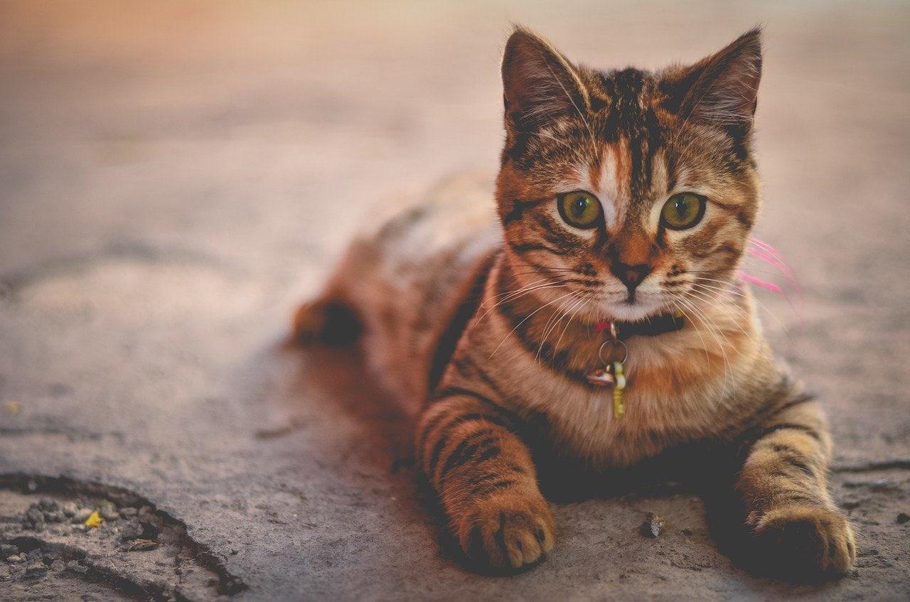 Kot czy kotka?