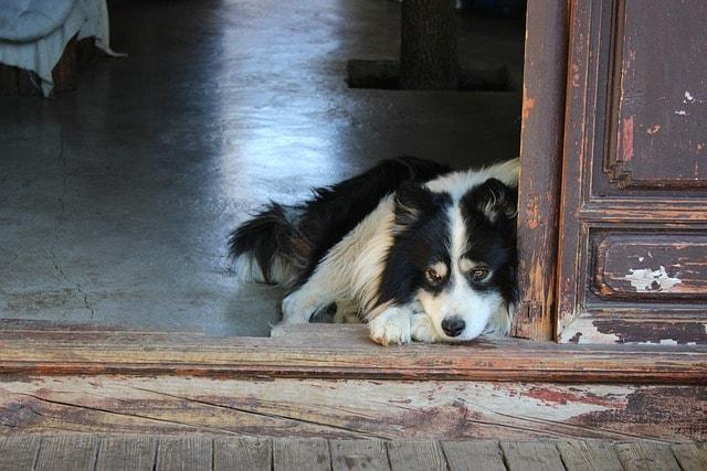 Pies w domu czy na zewnątrz?