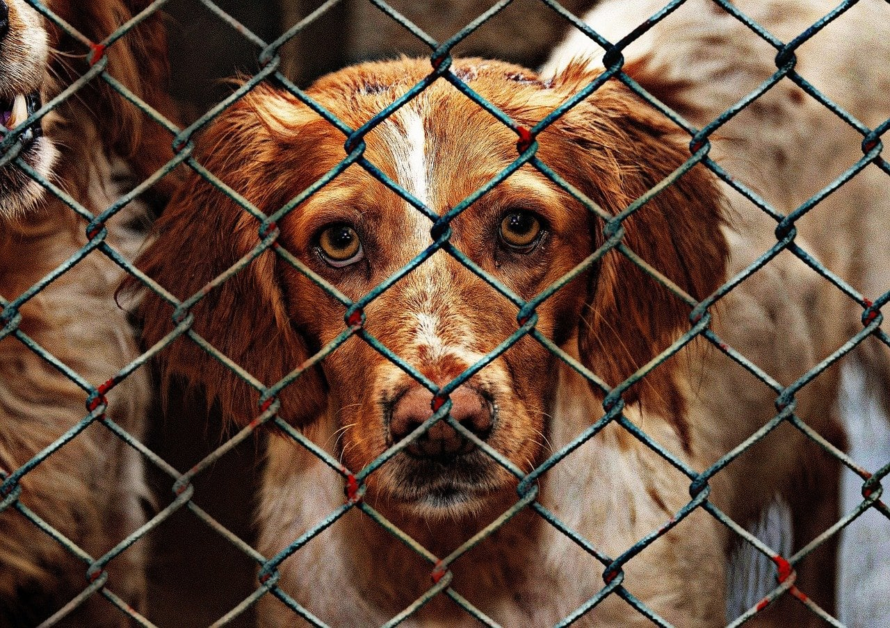 Ile trwa adaptacja psa ze schroniska?