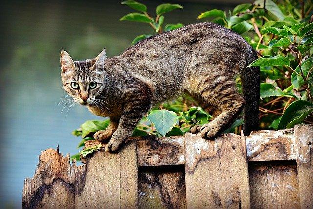 Czy kota trzeba szczepić?