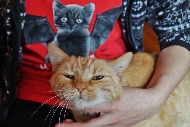 Mruczenie kota – co oznacza? Dlaczego kot mruczy?