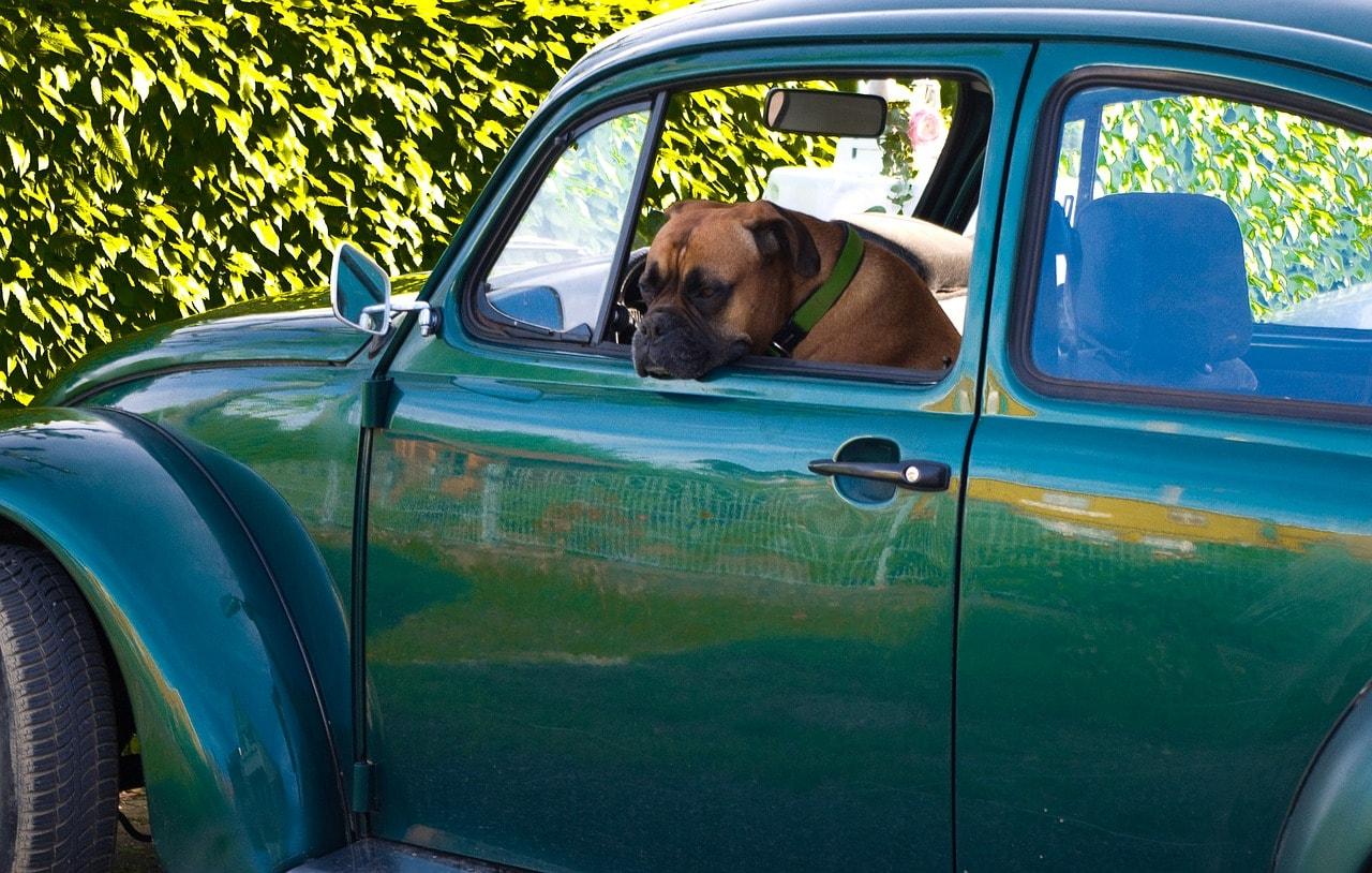 Pies w samochodzie – jak go przewozić?