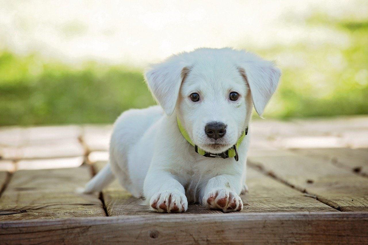 Jak przekonać rodziców do zakupu psa?